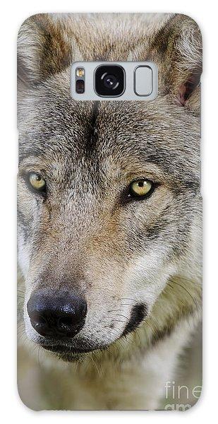 Timber Wolf Portrait Galaxy Case