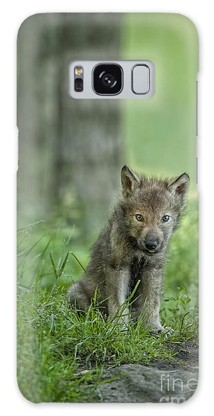 Timber Wolf Pup Galaxy Case