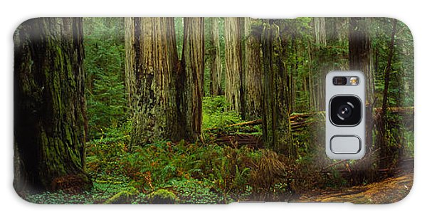 Trees In A Forest, Hoh Rainforest Galaxy Case