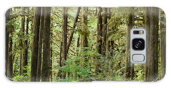 Olympic National Park Galaxy Case - Trees In A Forest, Quinault Rainforest by Panoramic Images