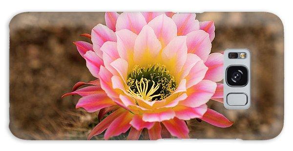 Desert Flora Galaxy Case - Usa, Arizona, Tucson, Cat Mountain by Peter Hawkins