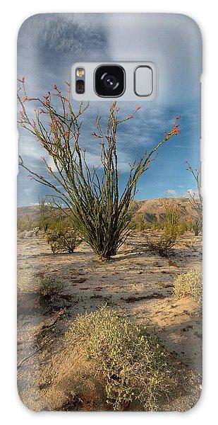 Desert Flora Galaxy Case - Usa, California Blooming Ocotillo by Judith Zimmerman