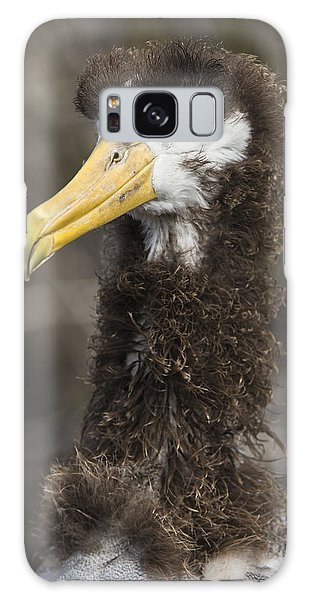 Albatross Galaxy S8 Case - Waved Albatross Molting Juvenile by Pete Oxford