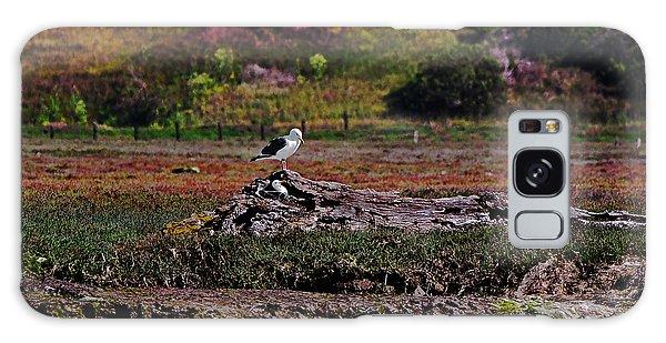 Western Gulls Nesting In A Log Galaxy Case