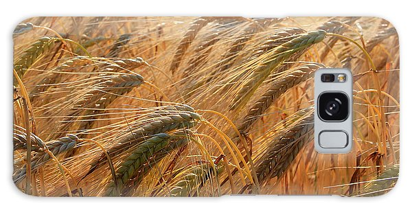 Wheat Galaxy Case