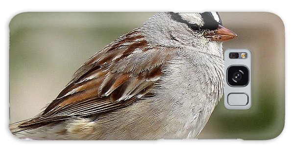White Crowned Sparrow Galaxy Case