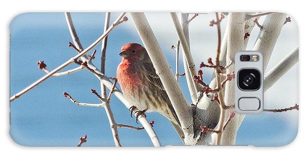 Wintering Sparrow Galaxy Case