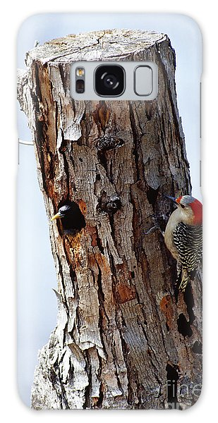 Woodpecker And Starling Fight For Nest Galaxy Case