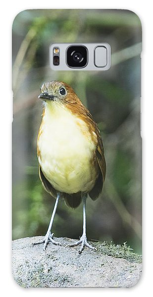 Yellow-breasted Antpitta Galaxy Case