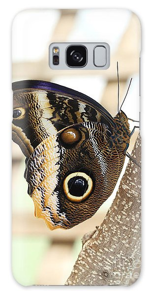 Yellow-edged Giant Owl Butterfly #4 Galaxy Case by Judy Whitton