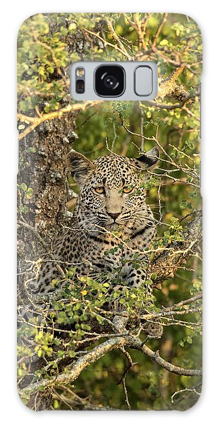 Hiding Galaxy Case - South Africa, Sabi Sabi Private Game by Jaynes Gallery