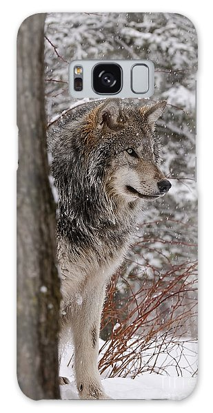 Timber Wolf Galaxy Case by Wolves Only
