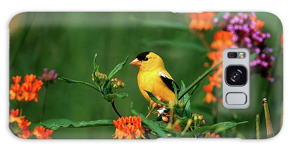 Finch Galaxy S8 Case - American Goldfinch (carduelis Tristis by Richard and Susan Day