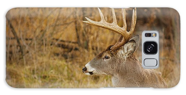 12 Point White-tail Galaxy Case by Larry Bohlin