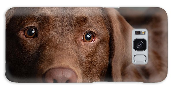 Chocolate Lab Galaxy Case - Portrait Of A Chocolate Labrador Dog by Animal Images