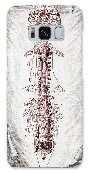 Nervous System Galaxy Case - 1731 Human Brain Spine Dissection Vesling by Paul D Stewart