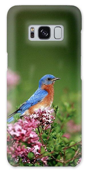 Eastern Bluebird Galaxy Case - Eastern Bluebird (sialia Sialis by Richard and Susan Day