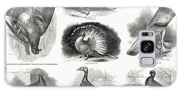 1868 Darwin Pigeon Breeds Illustration Galaxy Case