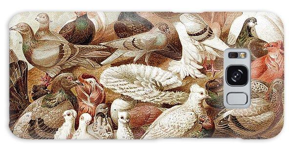 1870 Domestic Fancy Pigeon Breeds Darwin Galaxy Case