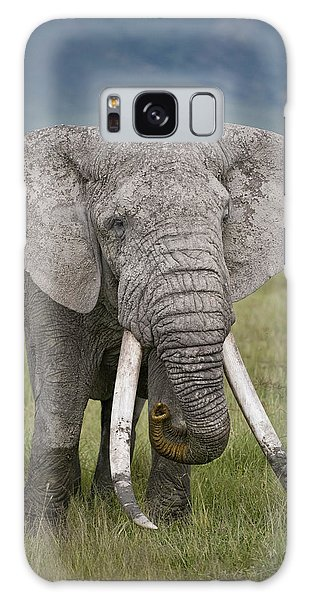 African Elephant Loxodonta Africana Galaxy Case