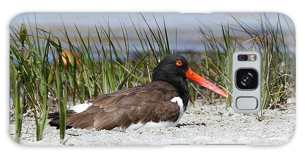 American Oystercatcher Galaxy Case
