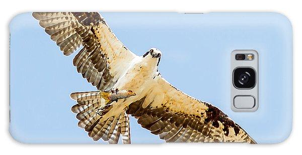 An Osprey Feeding On A Trout Galaxy Case