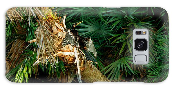 Anhinga Anhinga Anhinga On A Tree Galaxy Case by Panoramic Images