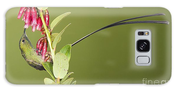 Black-tailed Train Bearer Hummingbird Galaxy Case