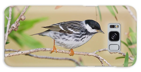 Hunting Island Galaxy Case - Blackpol Warbler (dendroica Striata by Larry Ditto