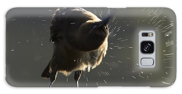 Boat Tailed Grackle Galaxy Case by Meg Rousher