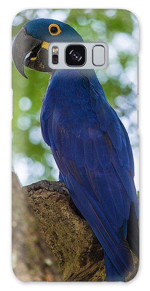 Macaw Galaxy Case - Brazil Hyacinth Macaw (anodorhynchus by Ralph H. Bendjebar