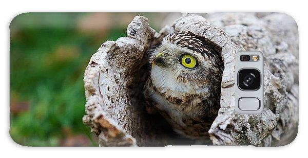 Burrowing Owl  Galaxy Case