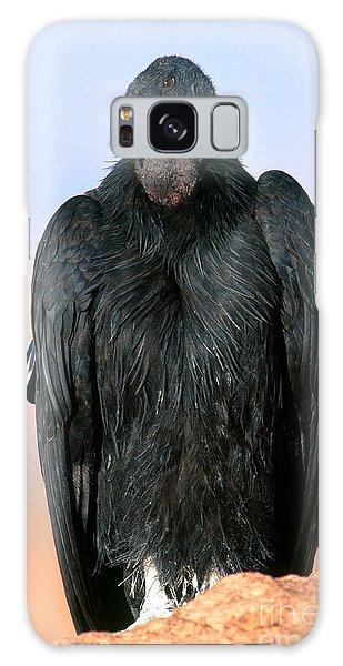 California Condor Galaxy Case