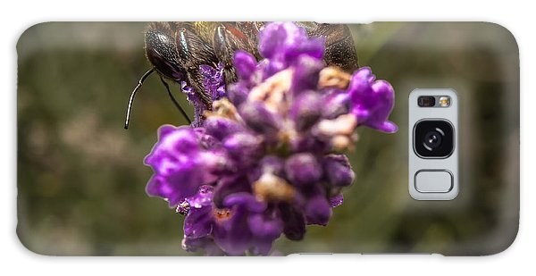 Carpenter Bee On A Lavender Spike Galaxy Case