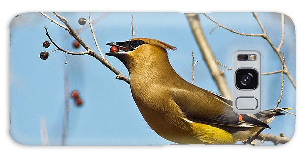 Cedar Waxwing With Berry Galaxy S8 Case