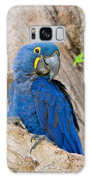 Close-up Of A Hyacinth Macaw Galaxy S8 Case