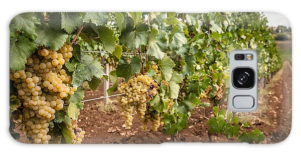 Close Up Of Ripe Wine Grapes On The Vine Ready For Harvesting Galaxy Case