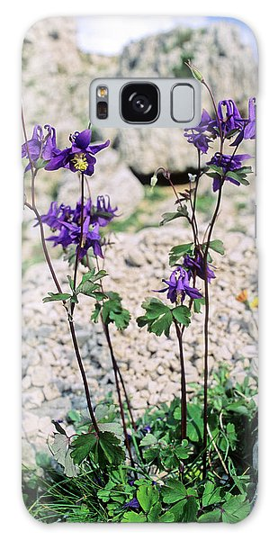Aquilegia Galaxy Case - Columbine (aquilegia Viscosa) by Bruno Petriglia/science Photo Library