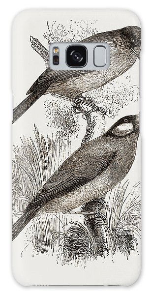 Crossbills Galaxy Case