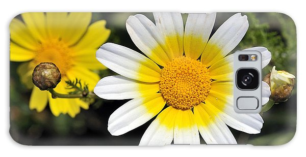 Crown Daisy Flower Galaxy Case by George Atsametakis