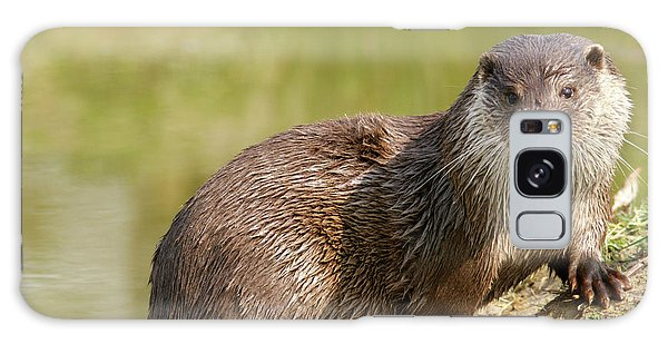 Otter Galaxy Case - European Otter by Louise Murray/science Photo Library