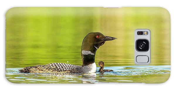 Loon Galaxy S8 Case - Female Common Loon With Newborn Chick by Chuck Haney
