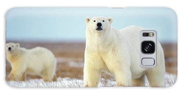 Polar Bear Galaxy S8 Case - Female Polar Bear With Spring Cub by Steven J. Kazlowski / GHG