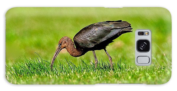 Glossy Ibis Galaxy Case by Paul Scoullar