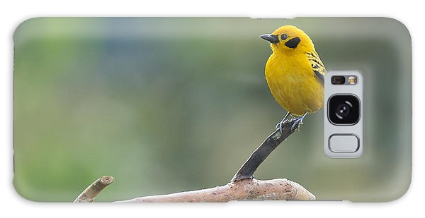 Golden Tanager Galaxy Case