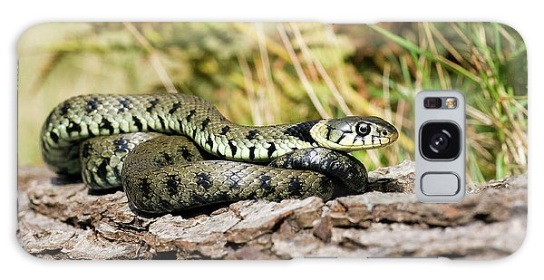 Grass Snake Galaxy Case - Grass Snake by John Devries/science Photo Library