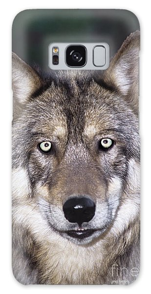 Gray Wolf Portrait Endangered Species Wildlife Rescue Galaxy Case by Dave Welling
