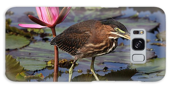 Green Heron Photo Galaxy Case by Meg Rousher