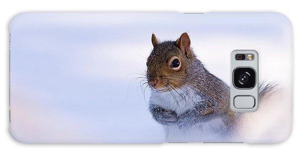 Grey Squirrel In Snow Galaxy Case