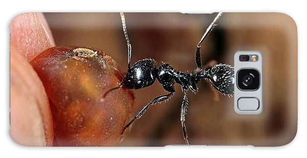 Behaviour Galaxy Case - Harvester Ant by Frank Fox